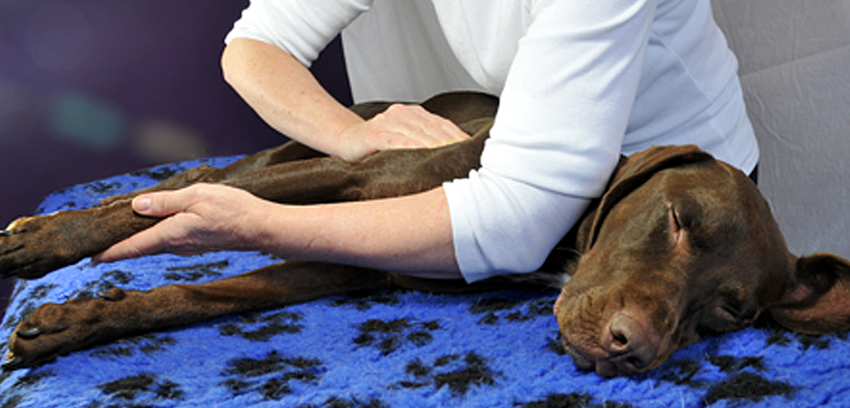 Tyneside Canine Massage - Massaging Dog